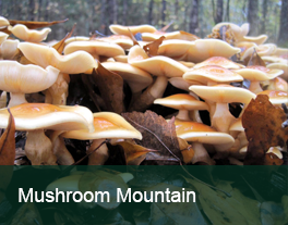 MushroomMountain