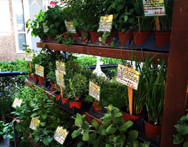 Plants with labels arranged on a shelf