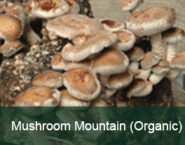 Mushroom-Mountain-Updated