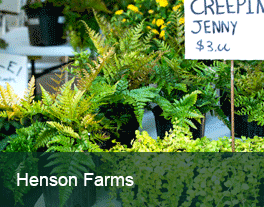Henson-Farms