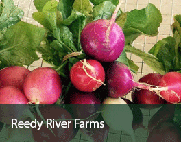 Reedy-River-Farms