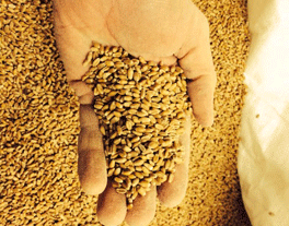 Grains in hand