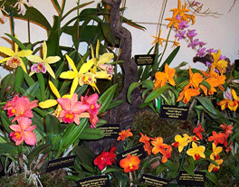 many colorful flowers