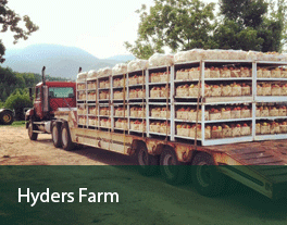 Hyders-Farm